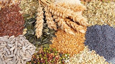Защита семян от стресса