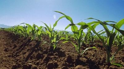 Сотрудничество в сфере производства семян