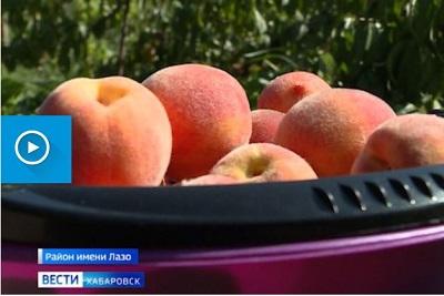 Новый вид персиков