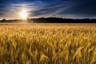 ФГИС прослеживаемости зерна
