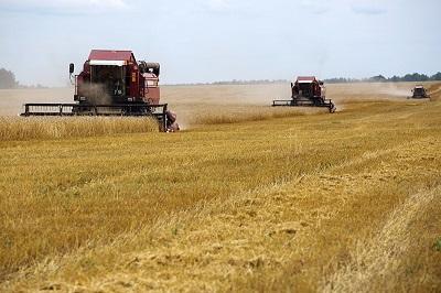 Твердая пшеница в цене